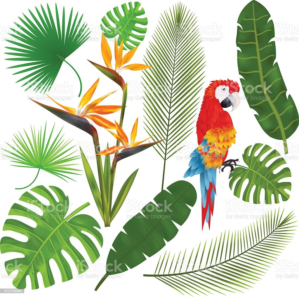 Tropical leaves, flowers and macaw vector illustration vector art illustration