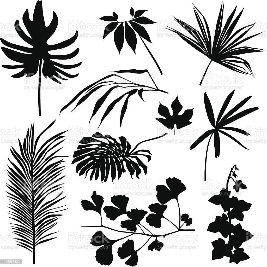 Tropical leaves set. royalty-free stock vector art