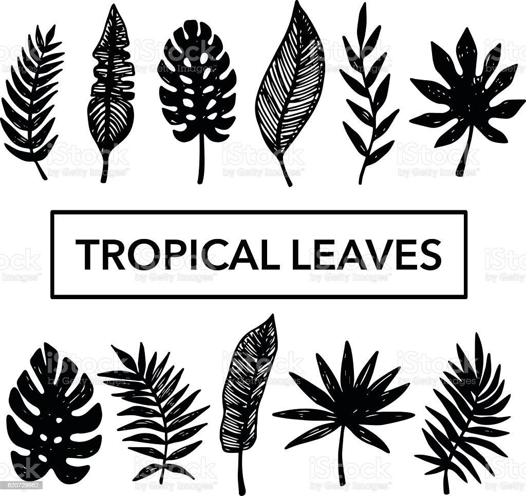 Tropical Leaves set vector art illustration
