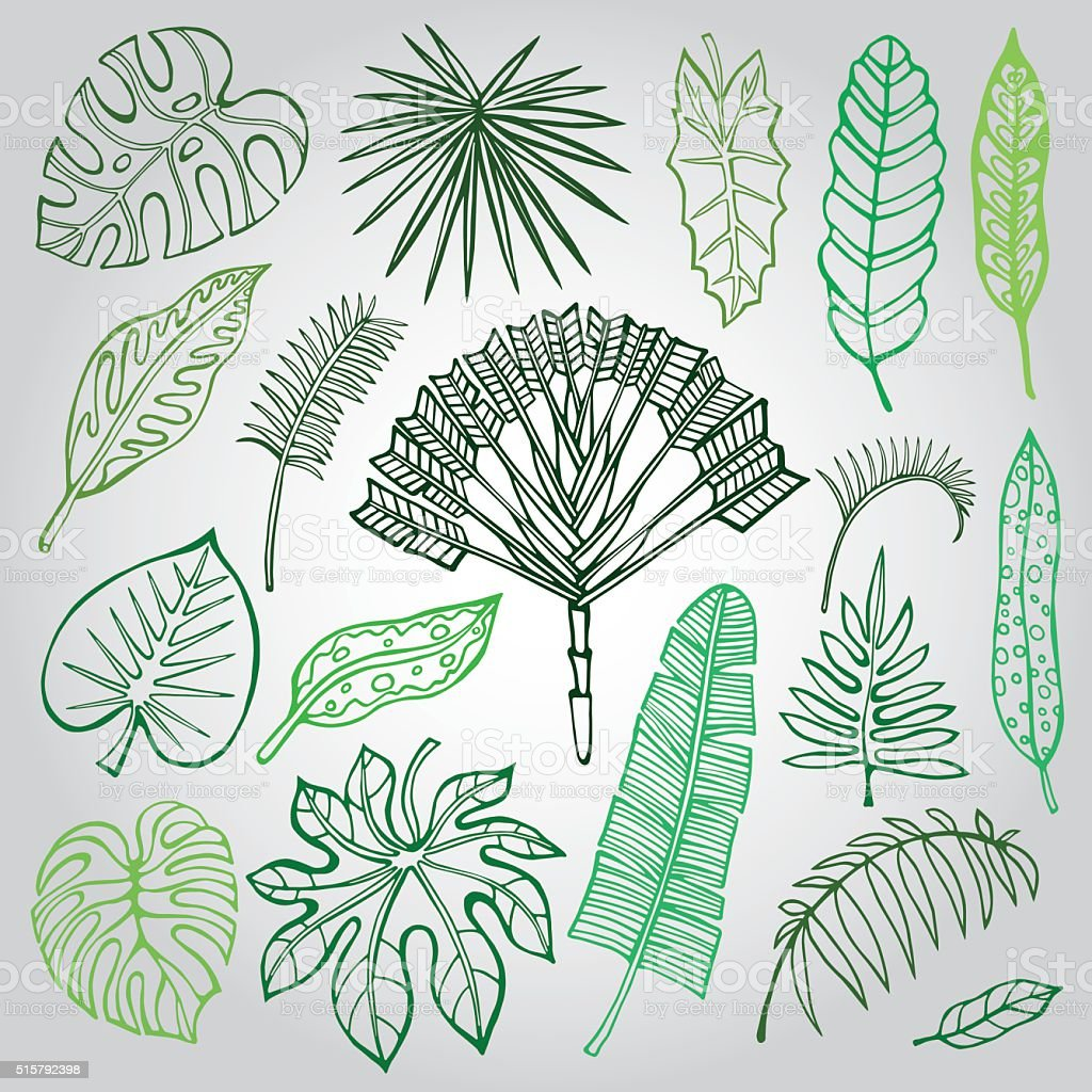 Tropical palm leaves,branches set.Outline,Green vector art illustration