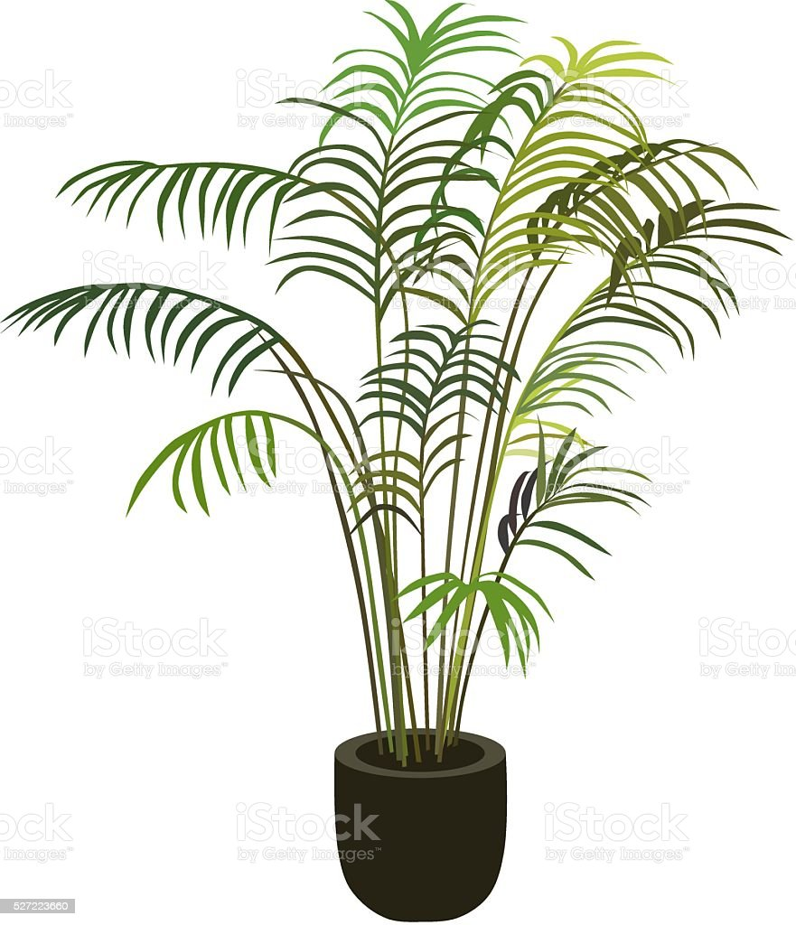 Tropical palm tree in flowerpot vector art illustration