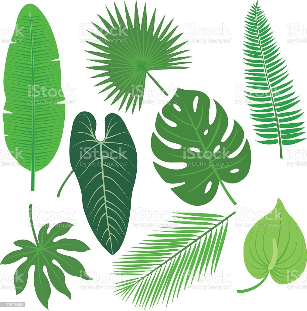 Tropical plant leaves vector collection vector art illustration