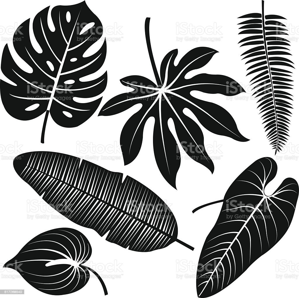Tropical plant leaves vector silhouette collection. vector art illustration