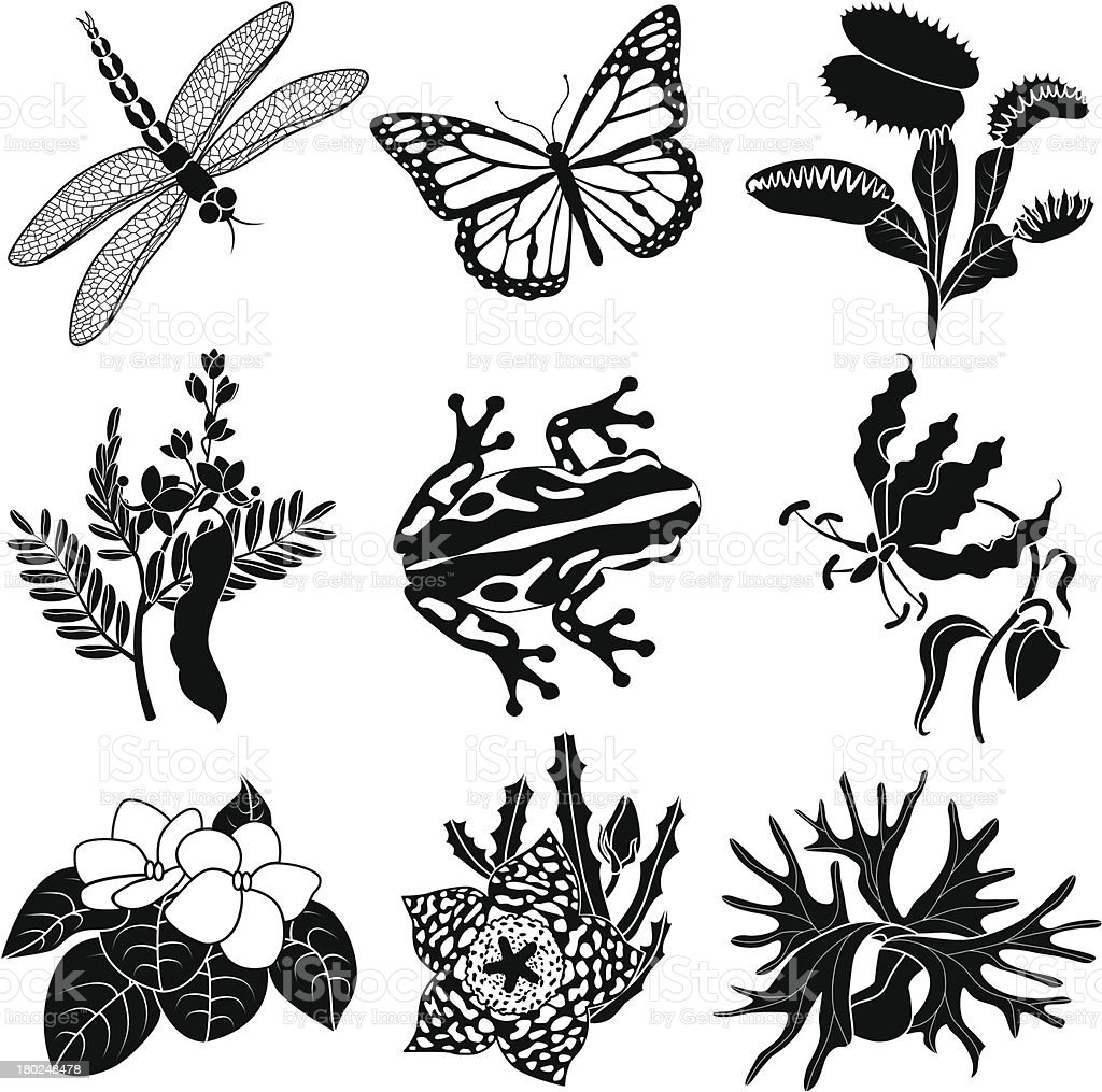 tropical plants and animals vector art illustration