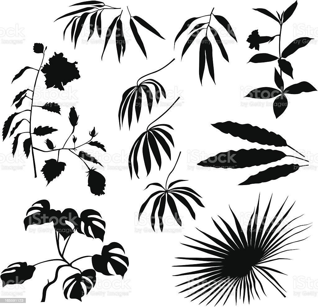 tropische pflanzen und bl tter vektor illustration. Black Bedroom Furniture Sets. Home Design Ideas