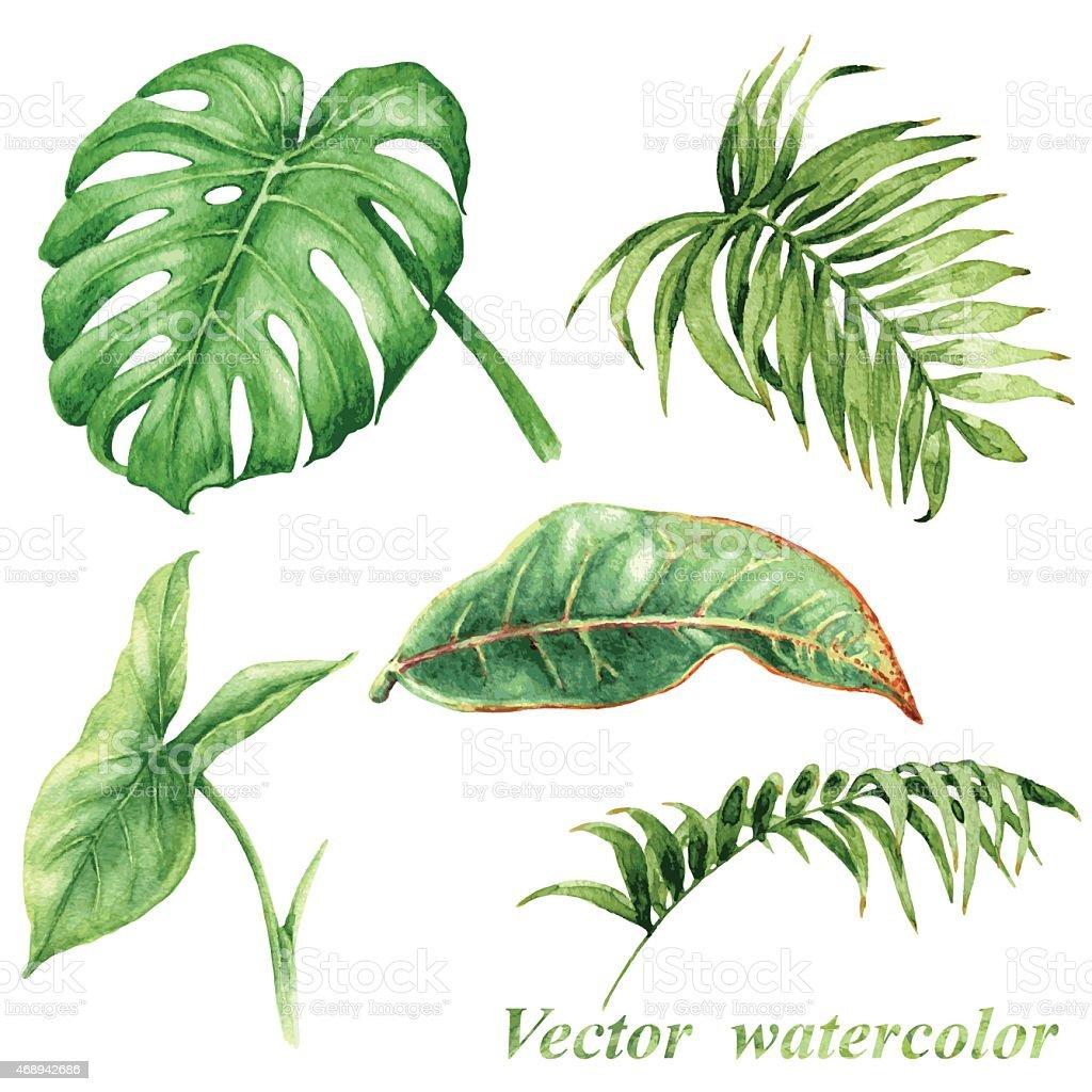 Tropical plants  leaves set vector art illustration