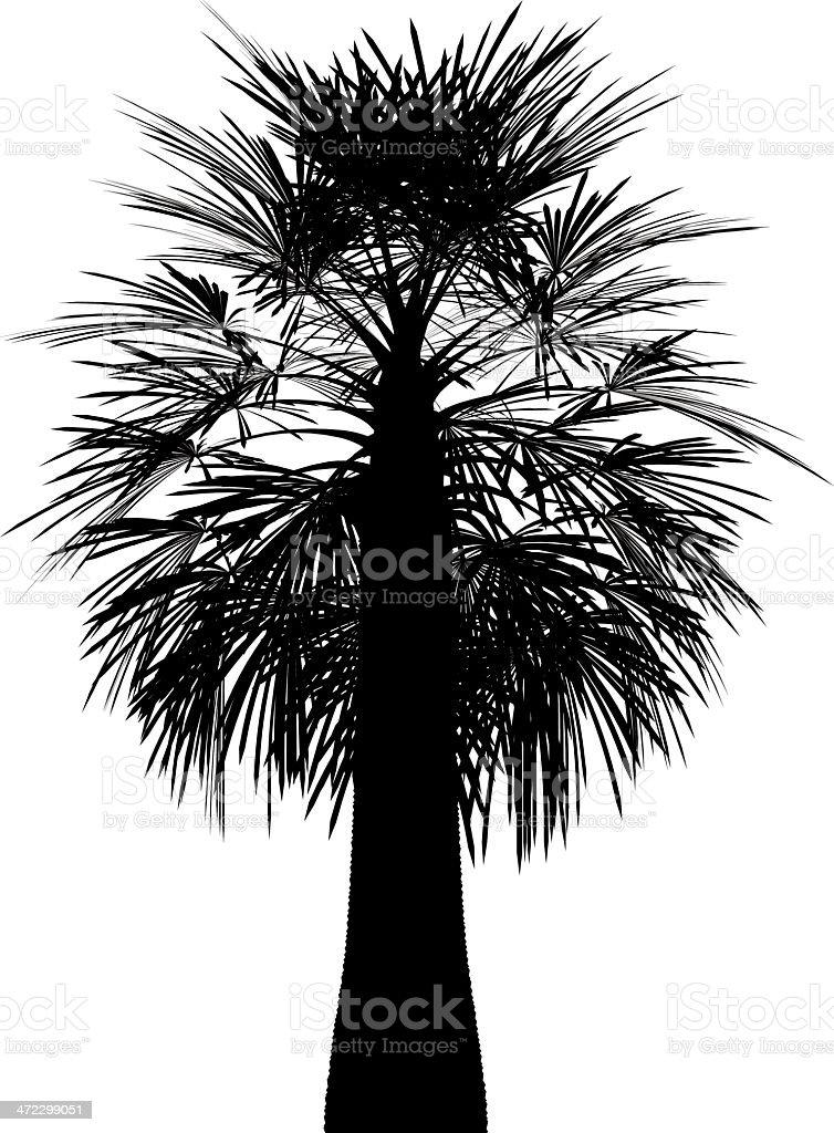 Tropical Tree vector royalty-free stock vector art
