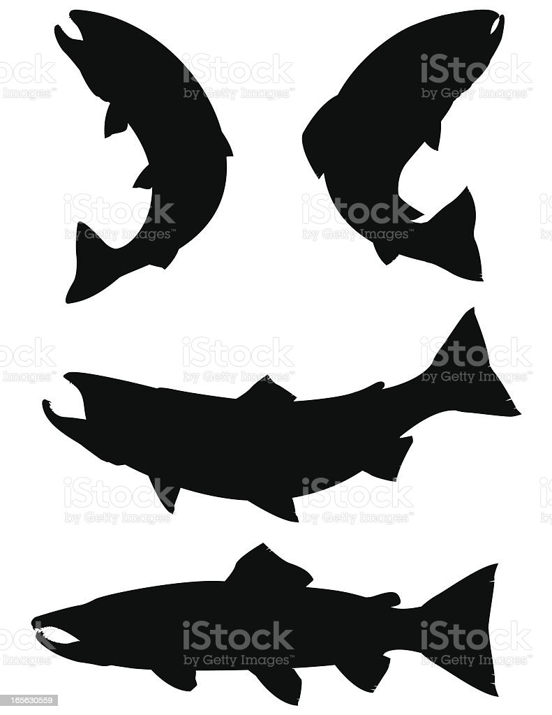 Trout and Salmon silhouettes vector art illustration