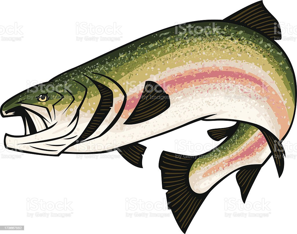 trout illustration royalty-free stock vector art