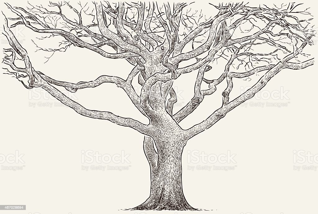 trunk of an old tree vector art illustration