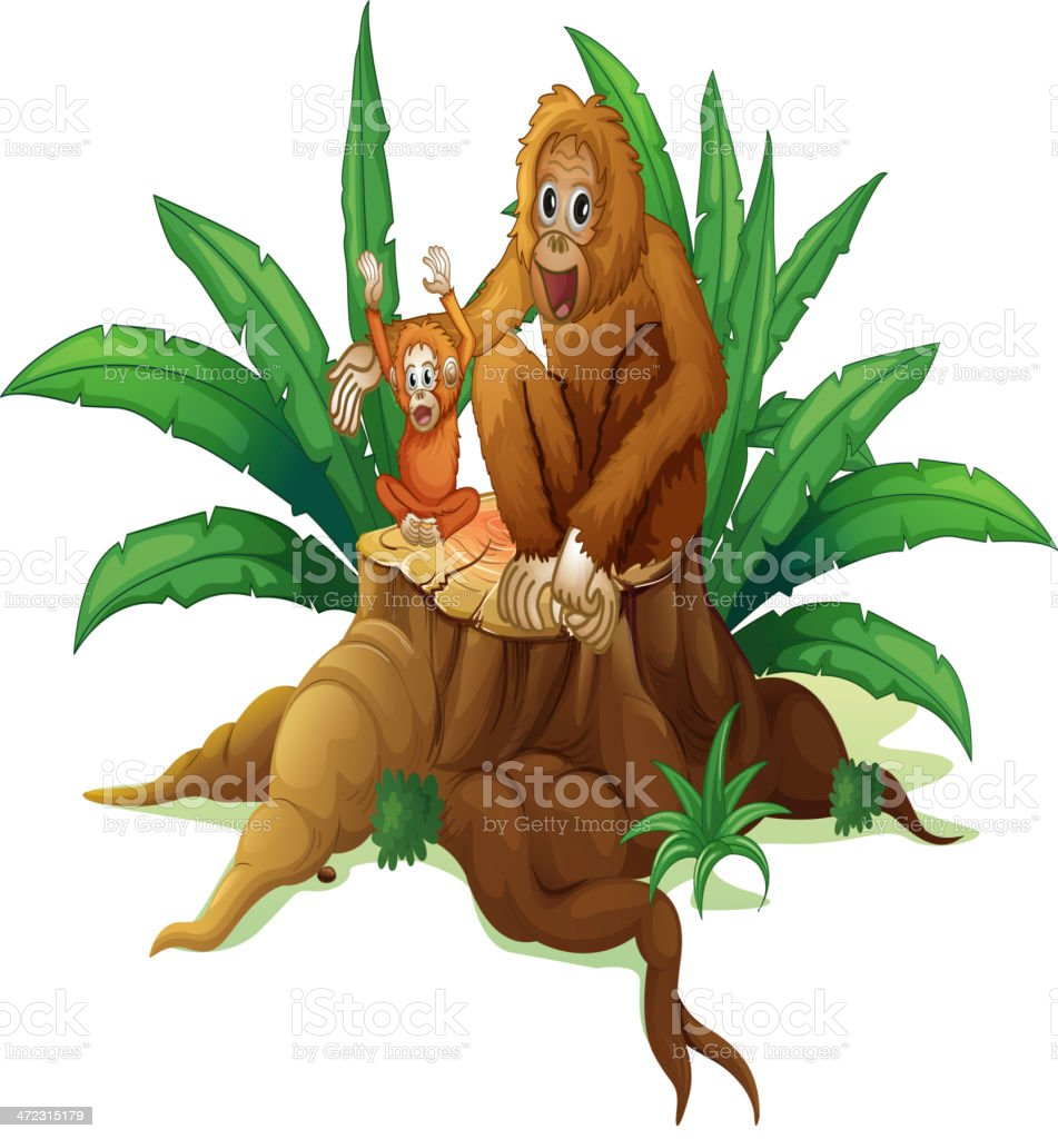 Trunk with small and big orangutan royalty-free stock vector art