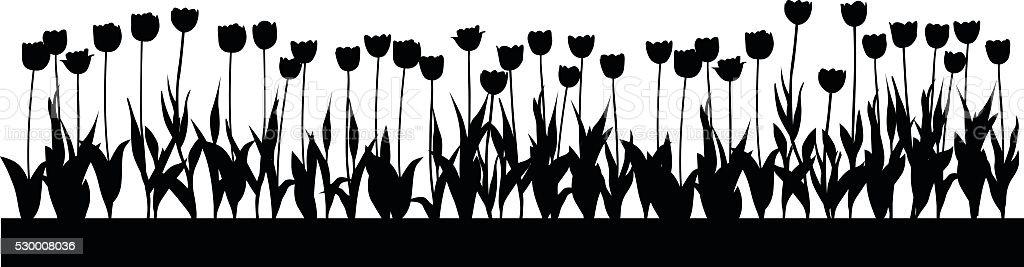 Tulip Bed vector art illustration