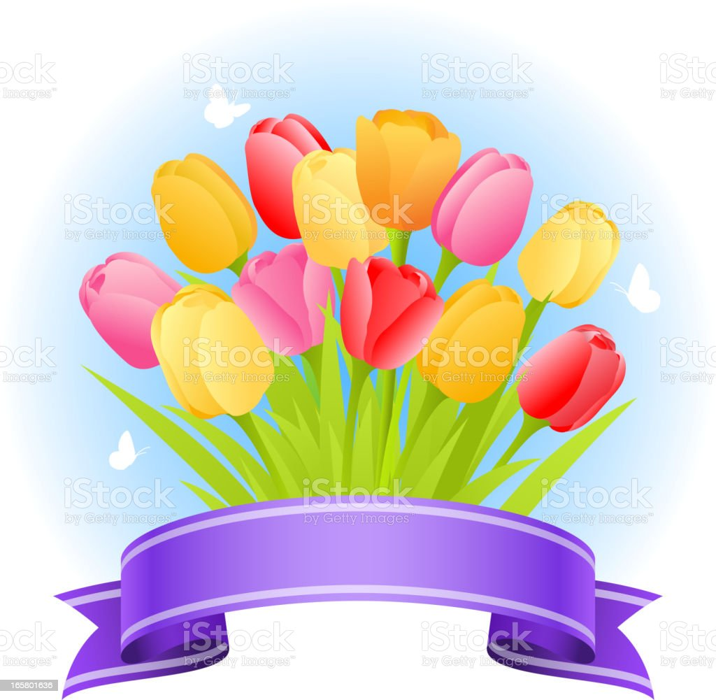 Tulip Bouquet with Ribbon Banner vector art illustration