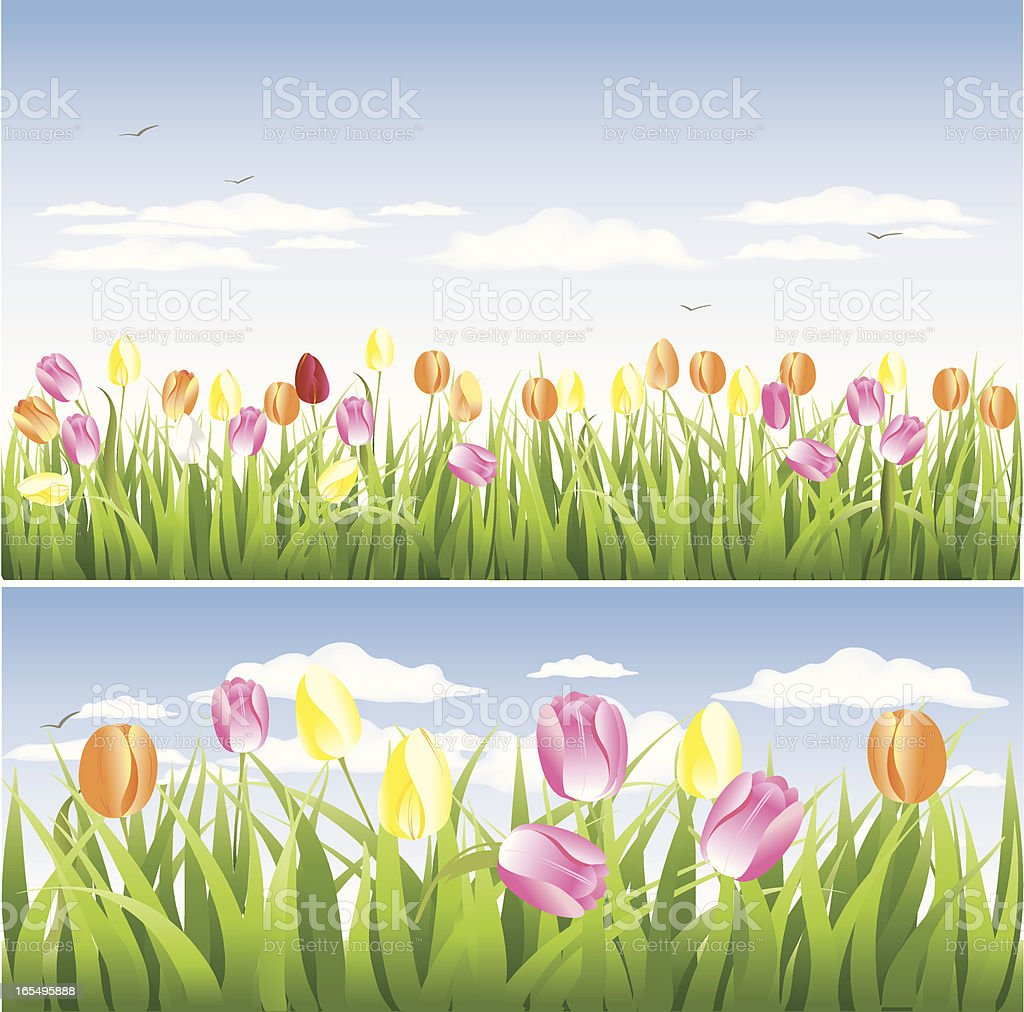 Tulip fields vector art illustration