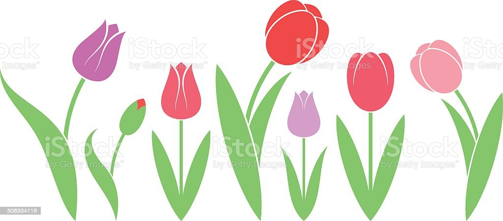 Tulip. Isolated flowers on white background vector art illustration
