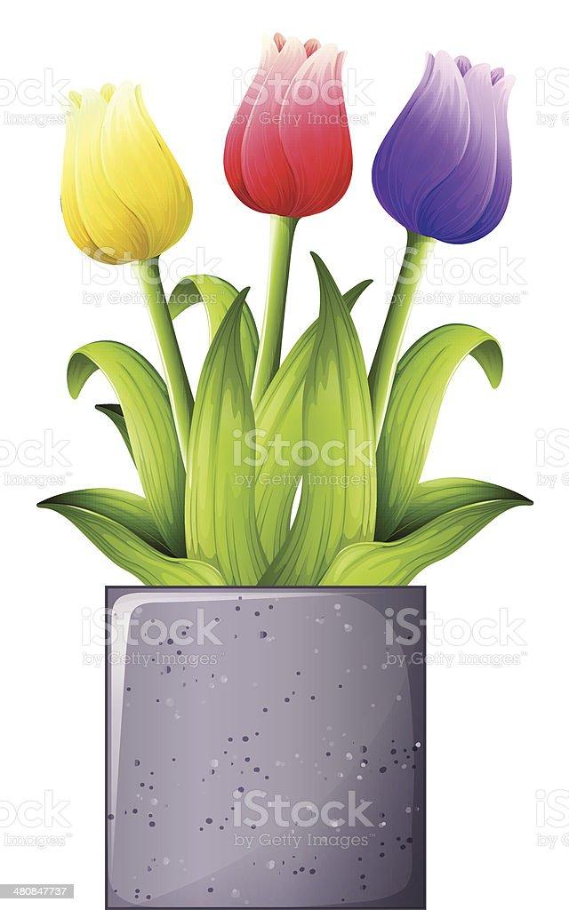 Tulip plant vector art illustration
