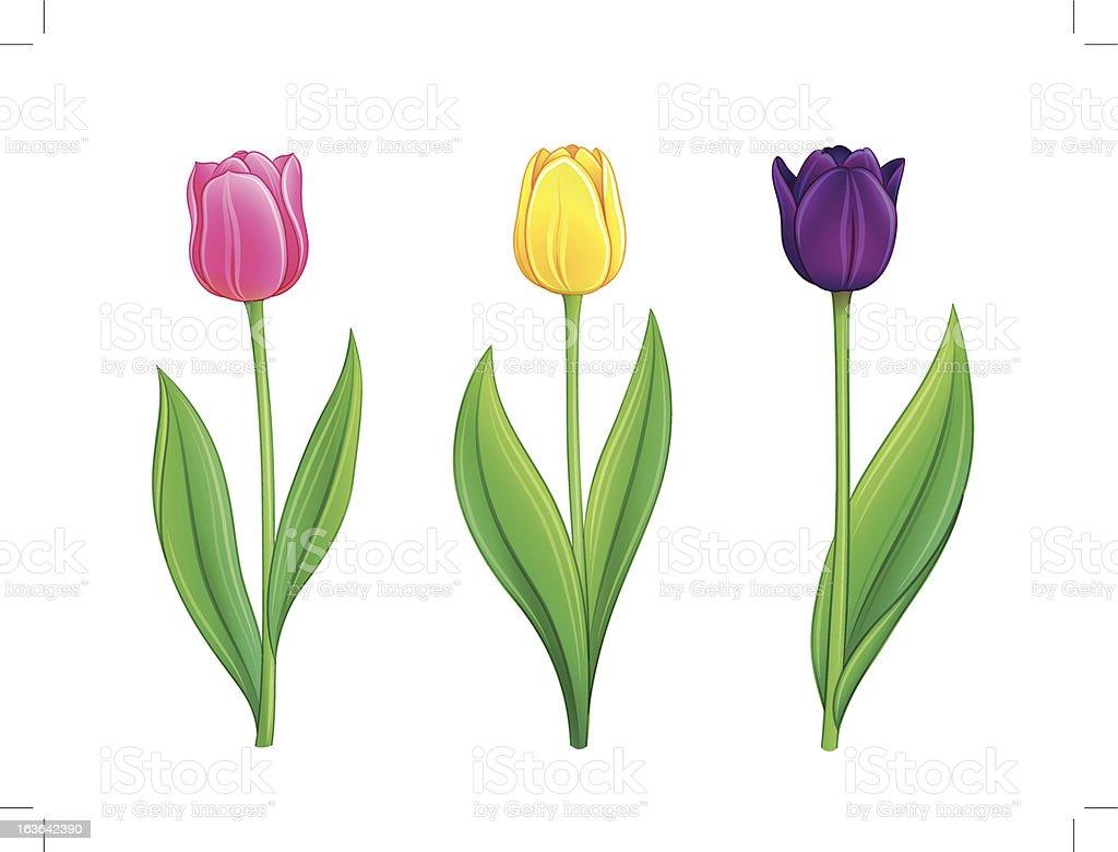 Tulips - eps10 vector illustration royalty-free stock vector art