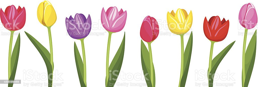 Tulips of various colors. Vector illustration. vector art illustration
