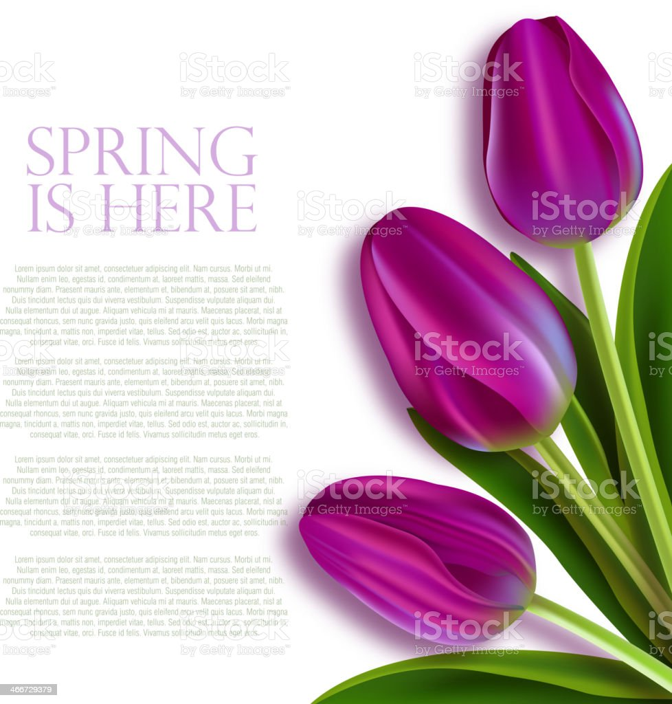 Tulips on white vector art illustration