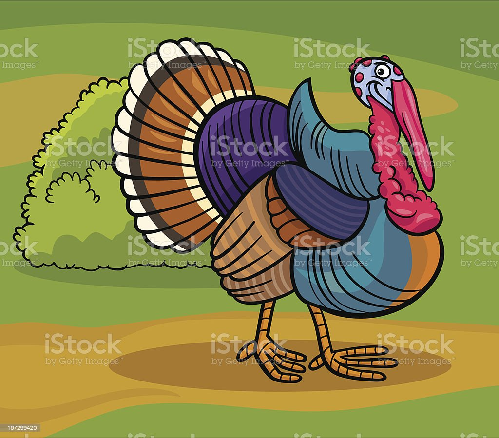 Cartoon Illustration of Funny Comic Turkey Farm Bird Animal