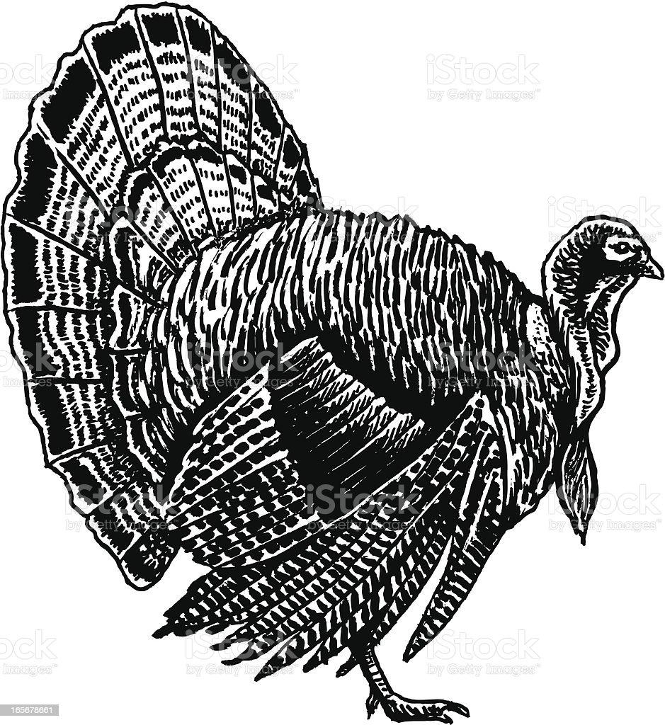 Turkey for Thanksgiving royalty-free stock vector art