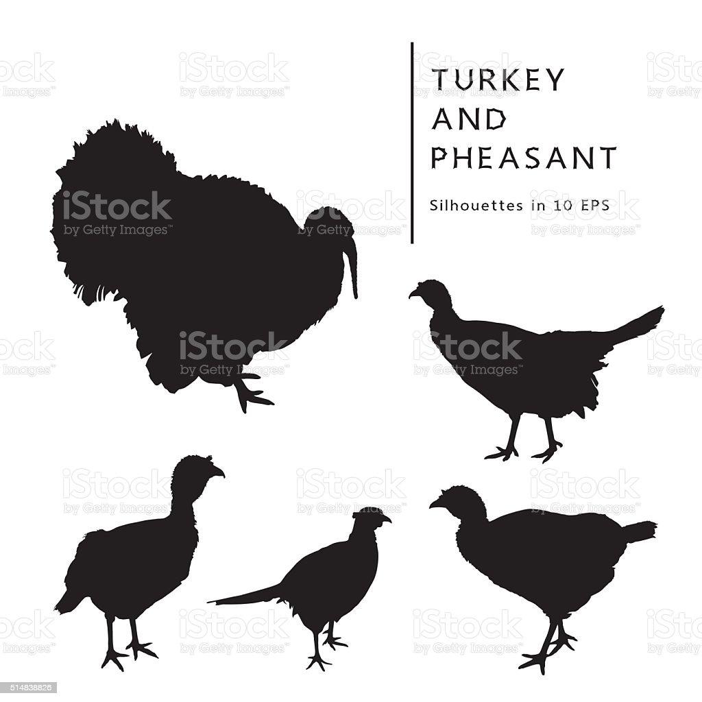 Turkey, Turkey Cock, And Pheasant. vector art illustration