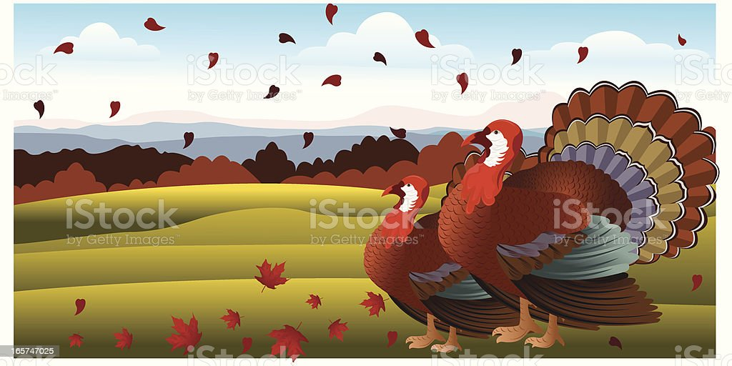 Turkey vector art illustration