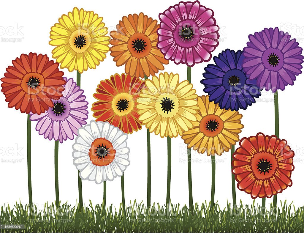 Twelve Daisies growing in Grass Isolated on White vector art illustration