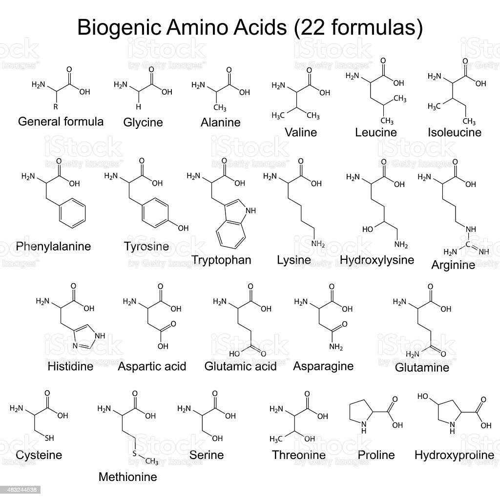 Twenty two biogenic amino acids - chemical formulas vector art illustration