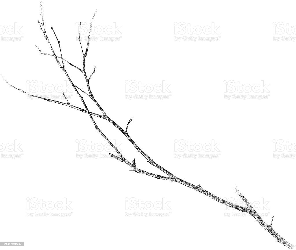 Twig Isolated On White vector art illustration