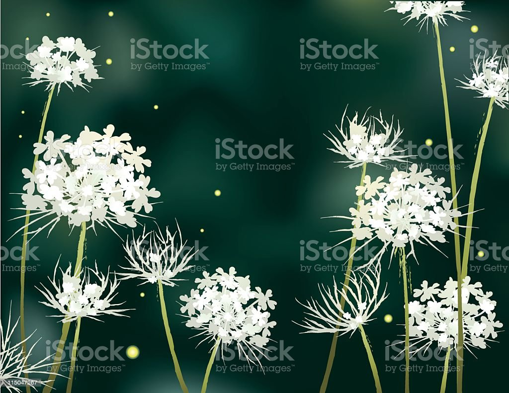 Twilight Queen Anne's Lace royalty-free stock vector art
