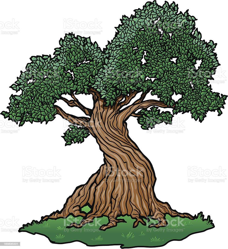twisty tree stock vector art 165635331 istock