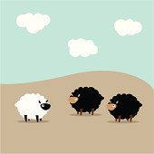 Two black sheep looking at a lone white sheep