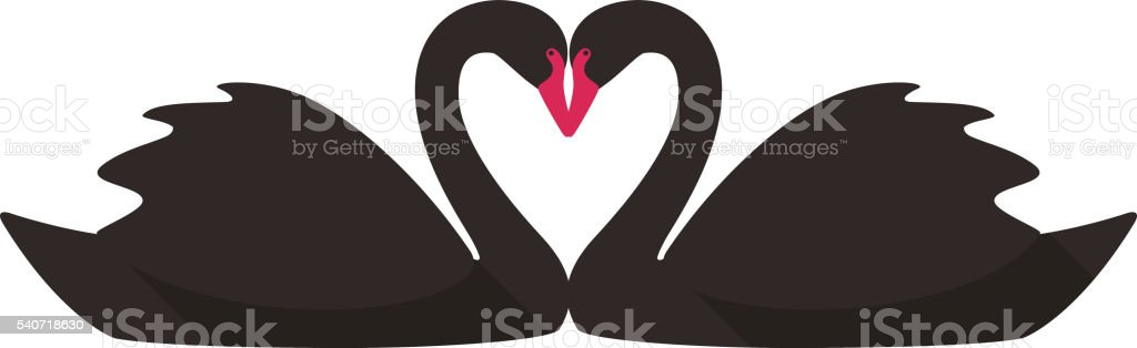 two black swans face to face swimming stock photo
