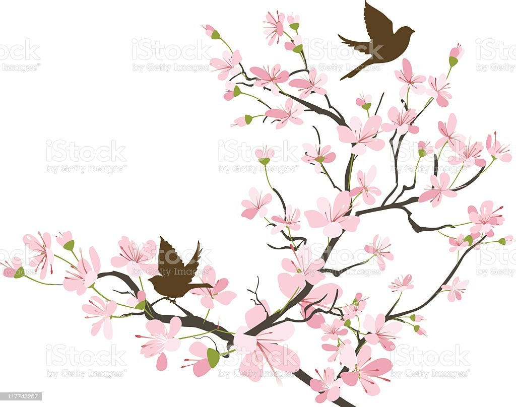 Two brown Sparrows Silhouette and Cherry Blossoms Branch vector art illustration