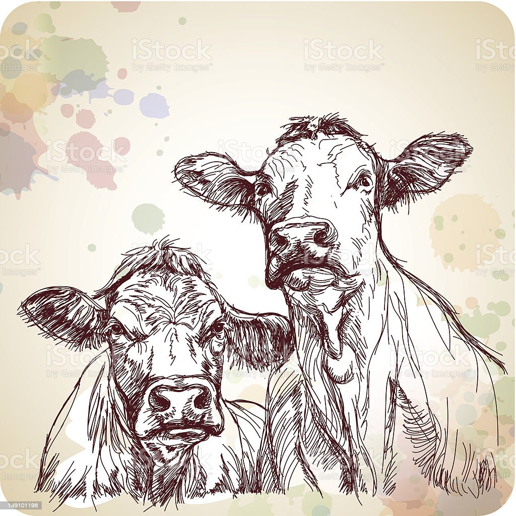 two cows royalty-free stock vector art