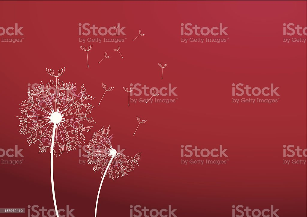 Two dandelion royalty-free stock vector art