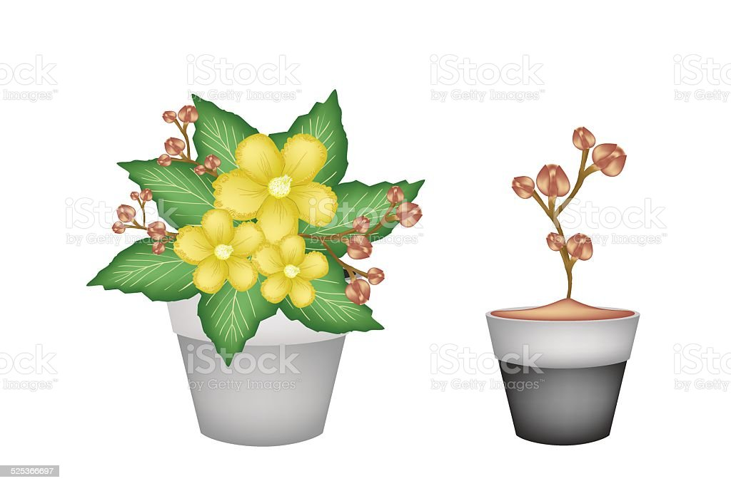 Two Fresh Yellow Simpor in Flower Pots vector art illustration