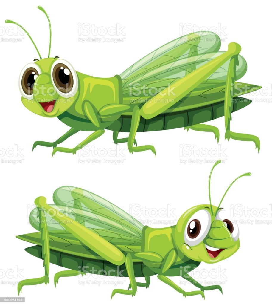 Two grasshoppers with happy face vector art illustration