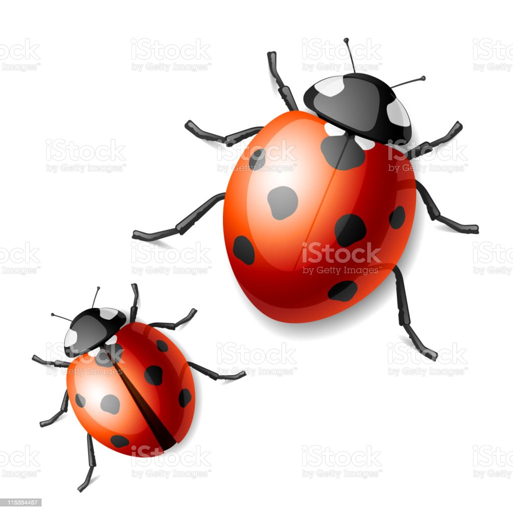 Two images of black and red ladybugs vector art illustration