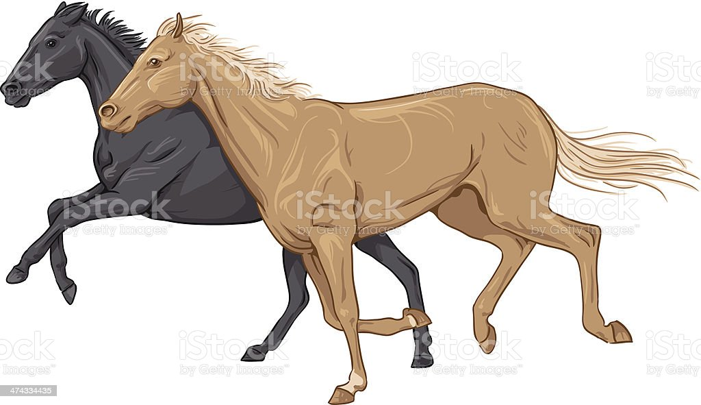 Two isolated galloping horses vector art illustration