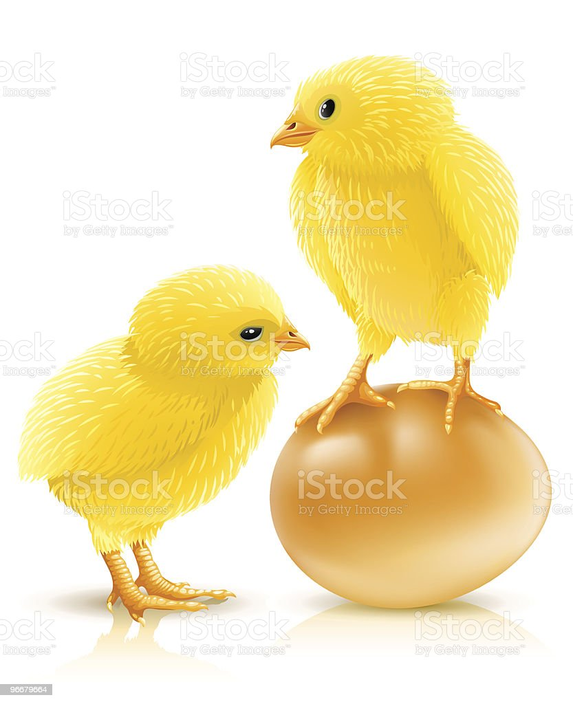 two little yellow chicken with egg royalty-free stock vector art