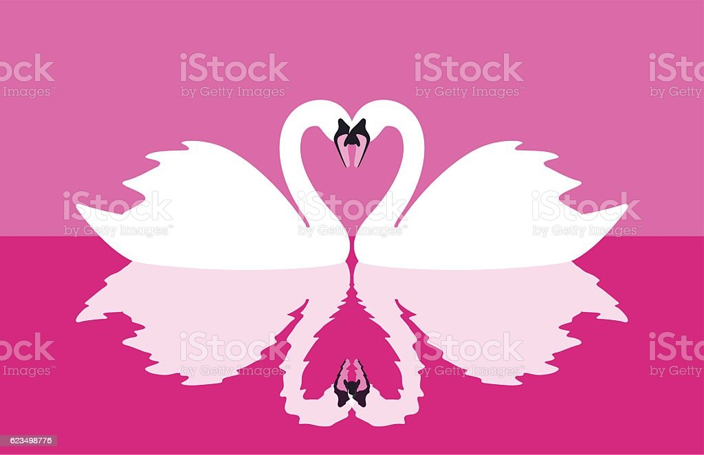 two mute swans face to face swimming, reflection in water vector art illustration