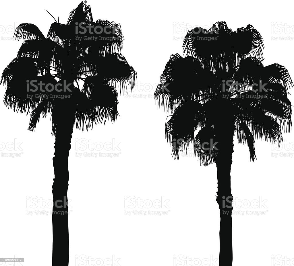 two palm royalty-free stock vector art