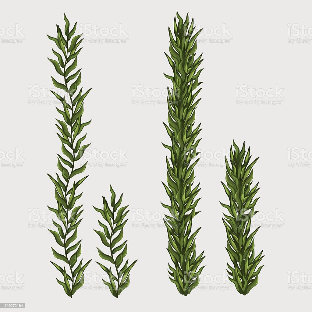 Two seaweed, classic underwater grass vector art illustration