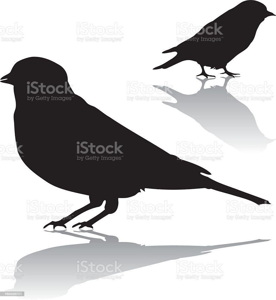 Two silhouettes of birds with shadows vector art illustration