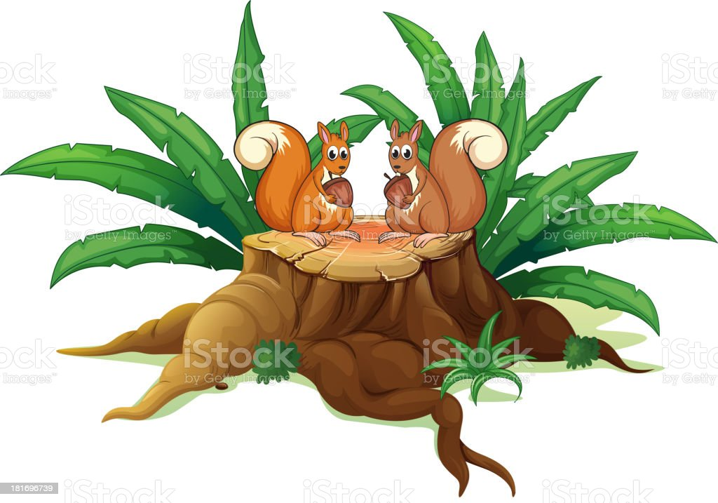 Two squirrels with nuts above the wood royalty-free stock vector art