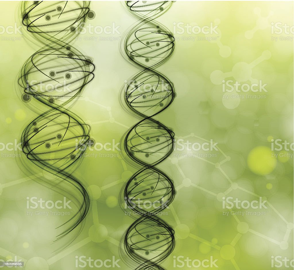 Two strands of DNA molecules on a green background royalty-free stock vector art