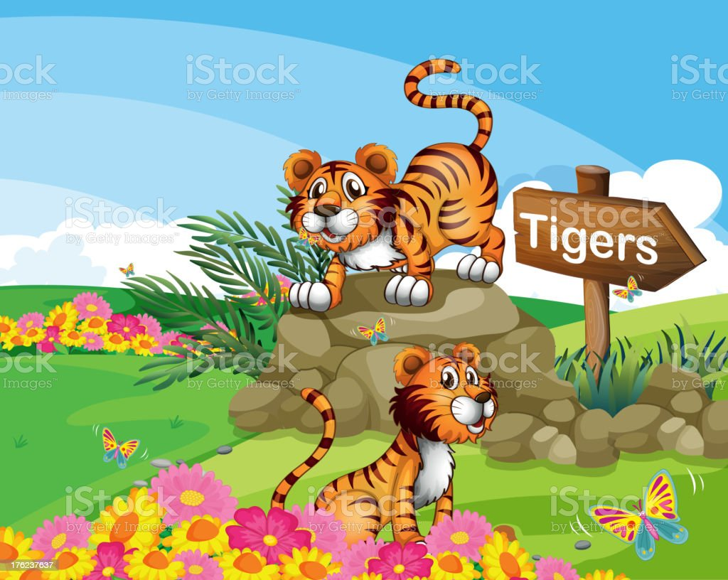 Two tigers beside a signboard royalty-free stock vector art