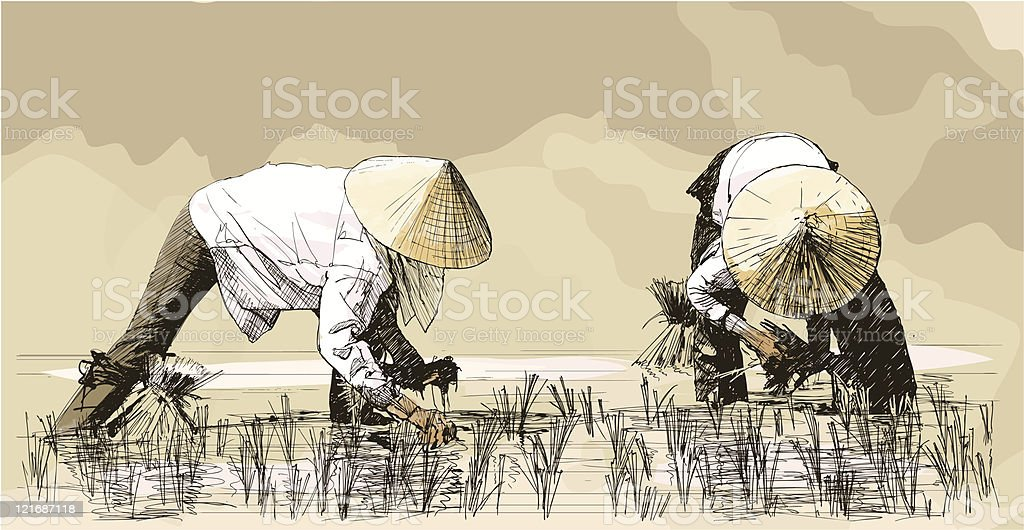 Two women harvesting rice in asia vector art illustration